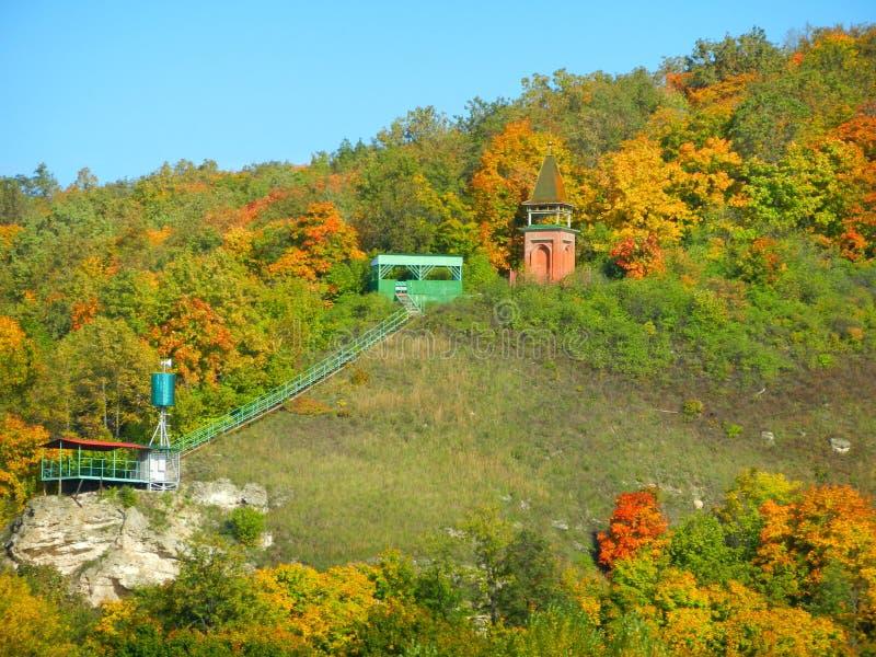 Rysk skog royaltyfria foton