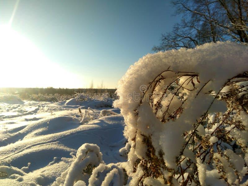 Rysk vinter skog, snö, jakt, förkylning, landskap arkivfoto