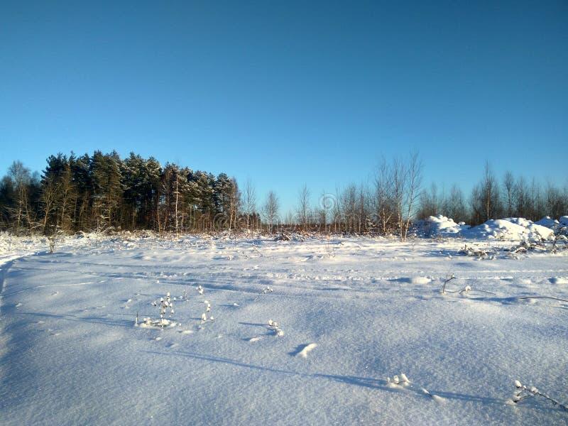 Rysk vinter vinterskog, vinterdag i skogen, landskap, träd i snön, utanför staden, på jakten fotografering för bildbyråer