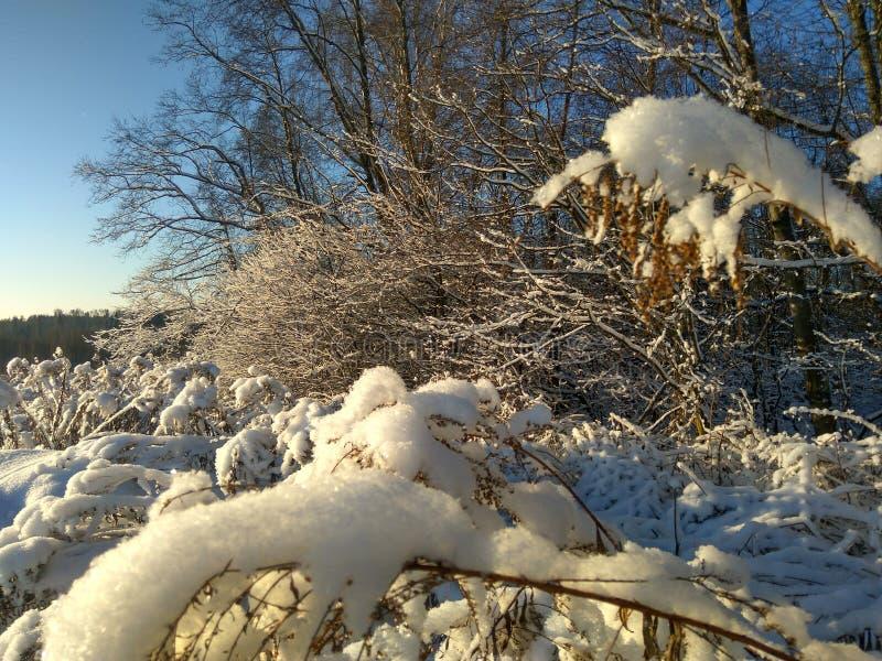 Rysk vinter vinterskog, vinterdag i skogen, landskap, träd i snön, utanför staden, på jakten arkivbild
