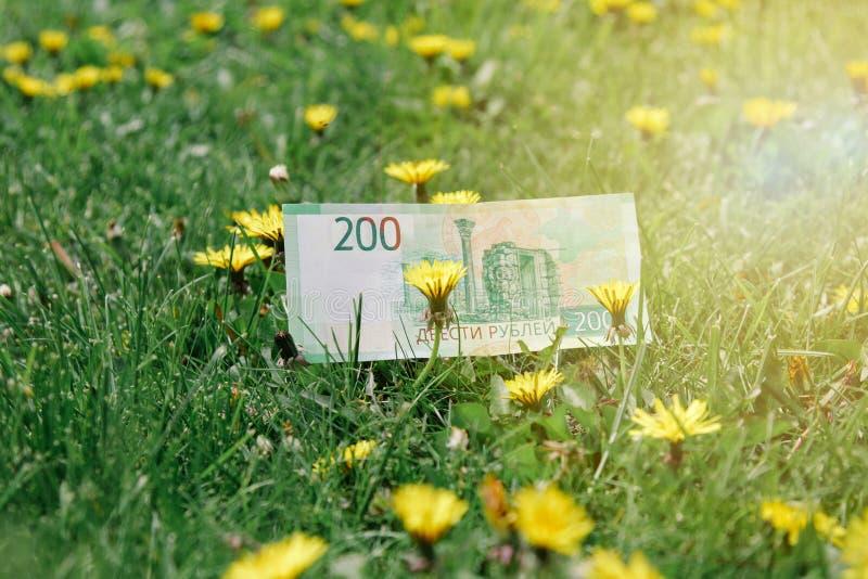 Ryska rubel på fält för grönt gräs och maskros royaltyfri fotografi