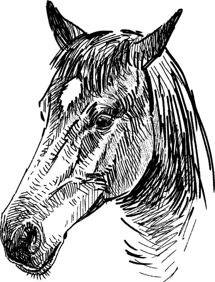 Rysować koń głowę ilustracja wektor