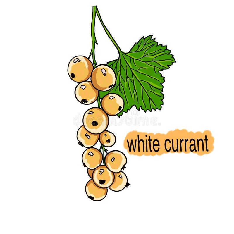 Rysować sprig biały rodzynek na białym tle ilustracji