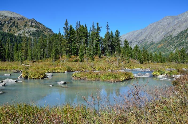 Ryssland berg Altai, flod Multa i området mellan de övre- och mellersta Multinskoye sjöarna arkivbilder