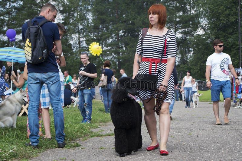 Ryssland Moskva, kan 26, 2016, kvinna med den svarta pudeln, ledare royaltyfria foton