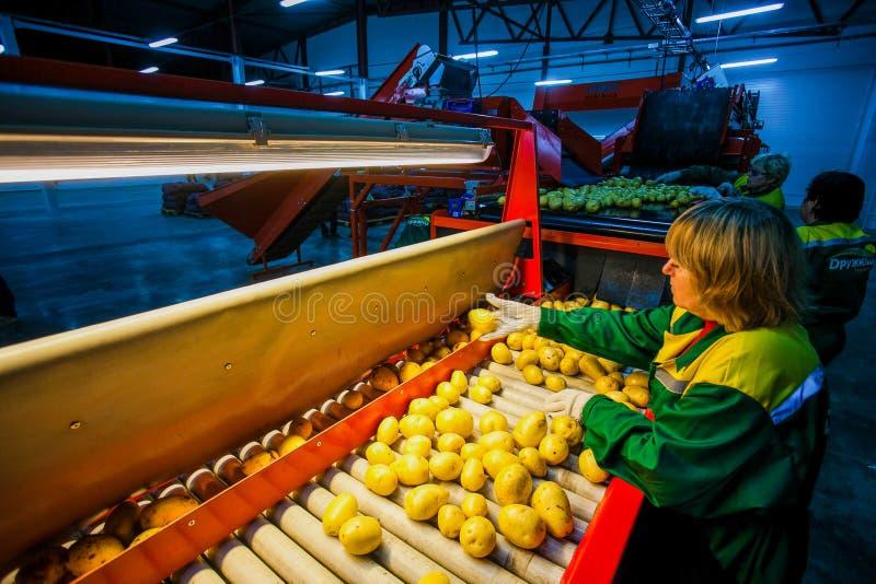 Ryssland Omsk - September 26, 2014: grönsakfabrik royaltyfria foton