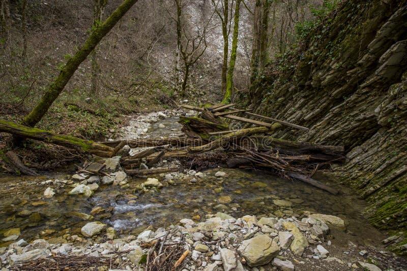 Ryssland Sochi Autumn Forest Mountain River royaltyfria foton