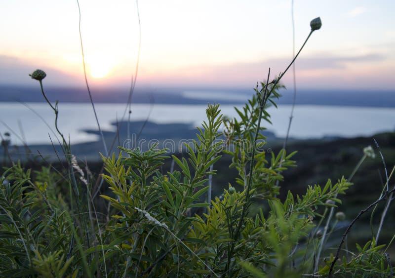 Ryssland Sommarsolnedgång i natur Fantastisk solnedgång över en sjö nära en grön äng royaltyfri foto
