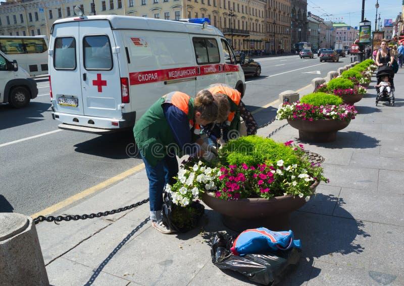 Ryssland St Petersburg Juli 2016 arbetare som tar omsorg av blommor arkivfoton