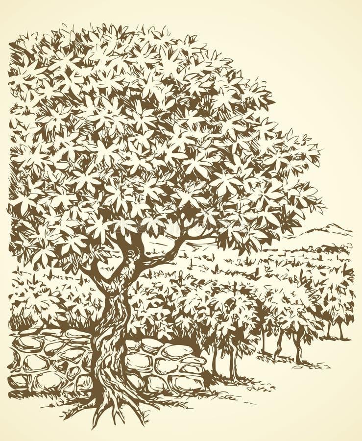 rysuje tła trawy kwiecistego wektora Drzewo w winnicy royalty ilustracja