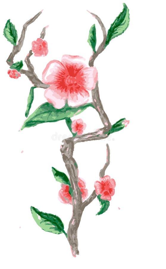 Rysunkowa gałąź Sakura, menchia kwiaty ilustracja wektor