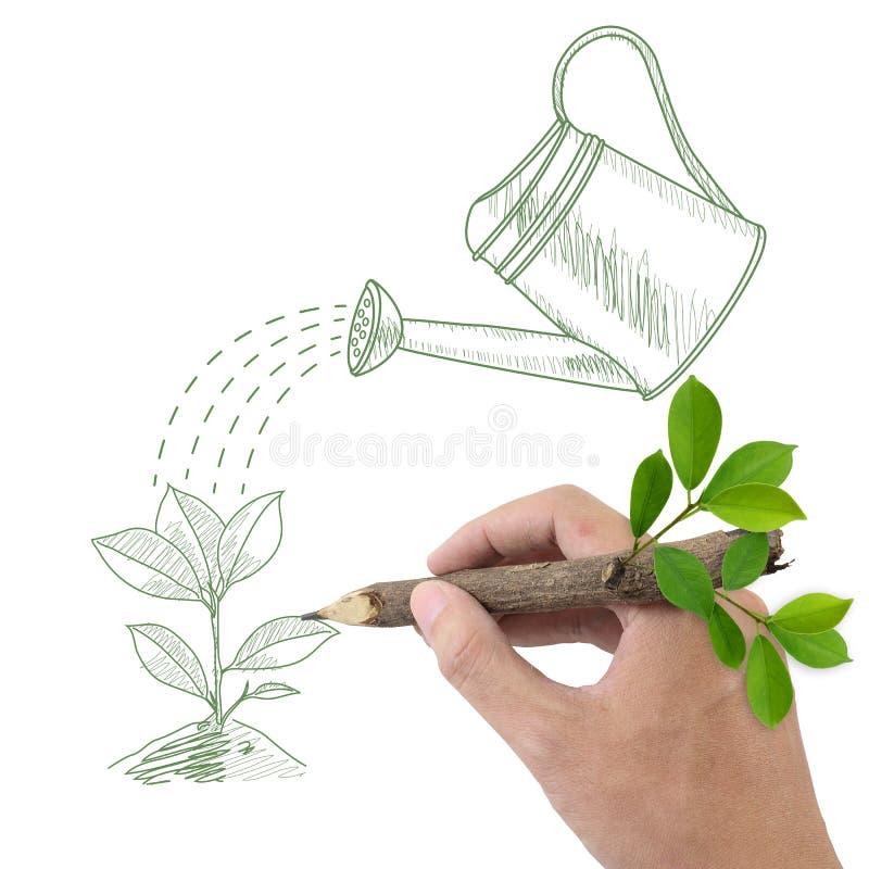 Rysunkowa zielona roślina i podlewanie możemy. obrazy royalty free