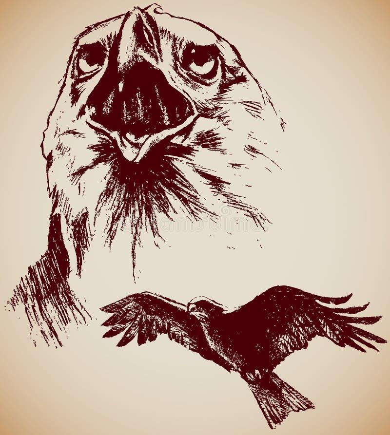 rysunkowi orły dwa ilustracja wektor