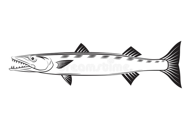 Rysunkowy Barracuda royalty ilustracja