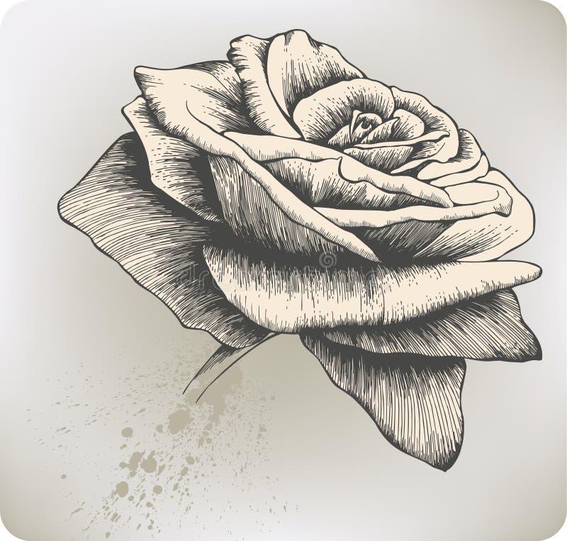 rysunkowy ręki ilustraci róży wektoru rocznik royalty ilustracja