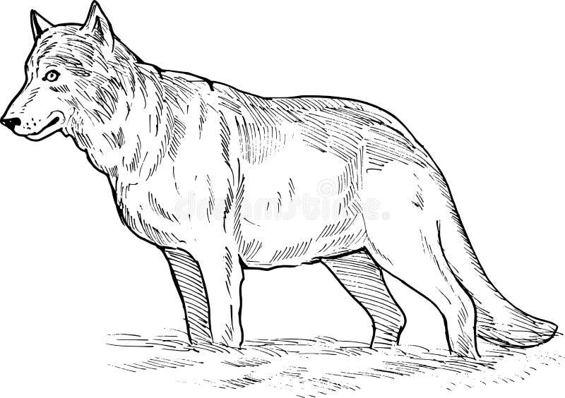 rysunkowy szary wilk royalty ilustracja