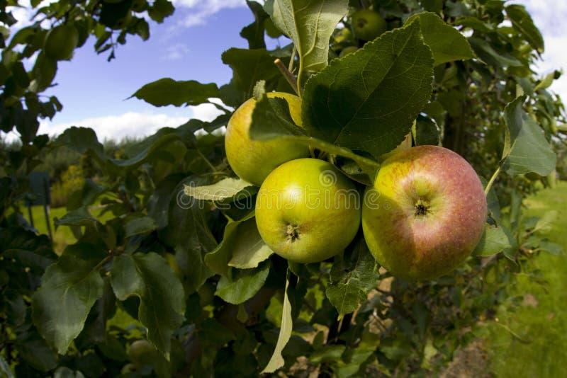ryton warwickshire midlands садов сада Англии органическое стоковая фотография