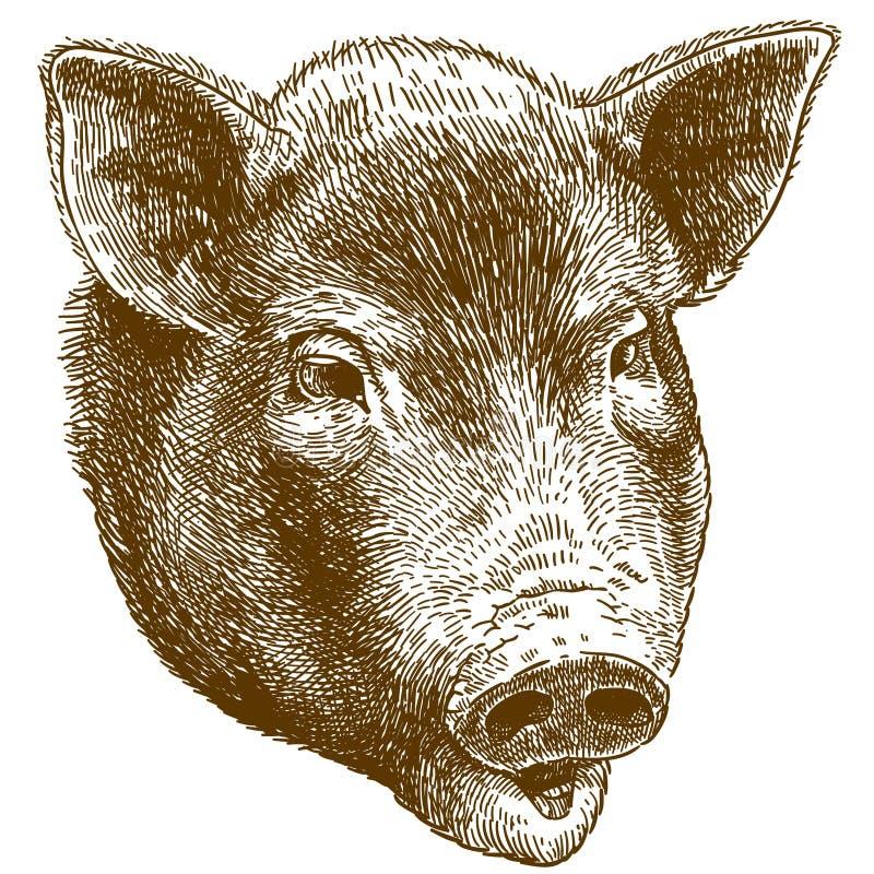 Rytownictwo ilustracja duża świni głowa royalty ilustracja