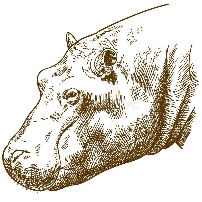 Rytownictwo ilustracja hipopotam głowa royalty ilustracja