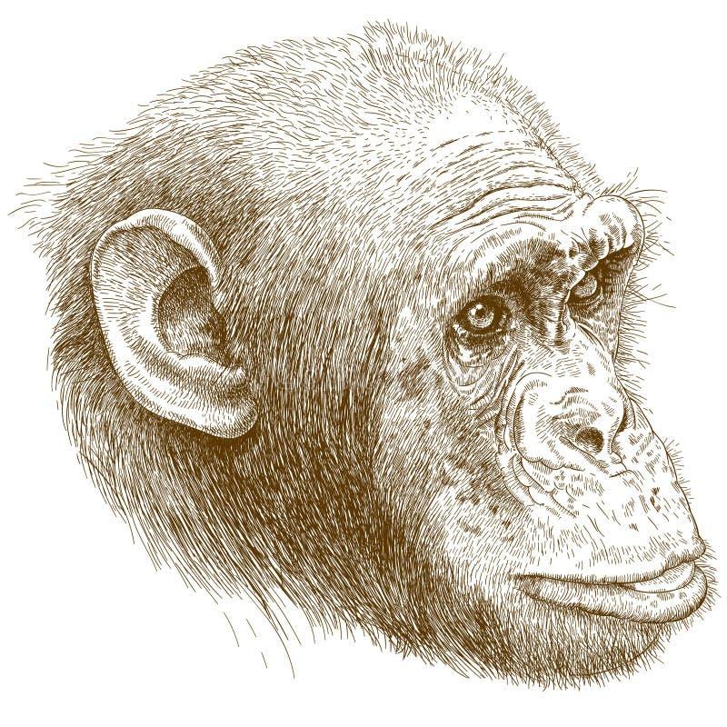 Rytownictwo ilustracja szympansa kaganiec ilustracji