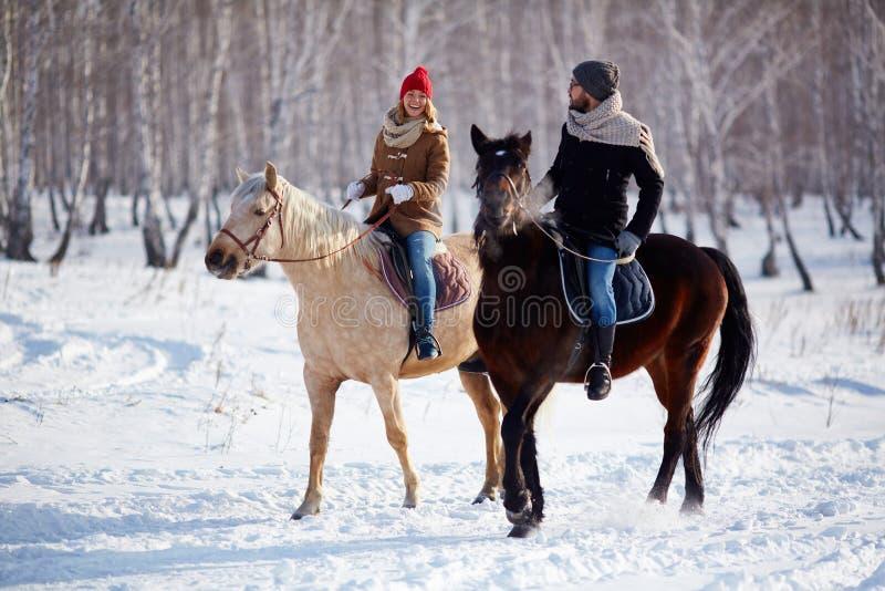 Ryttare på en häst arkivbilder
