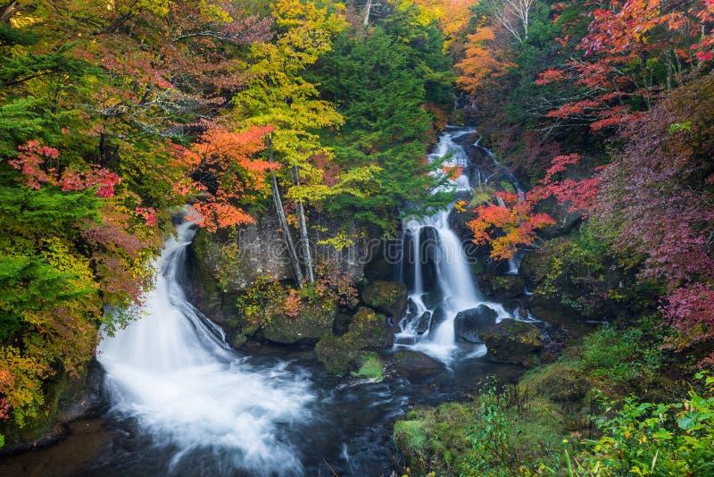 Ryuzu vattenfall i höst den mest favoriten för turist i Nikko, royaltyfri fotografi