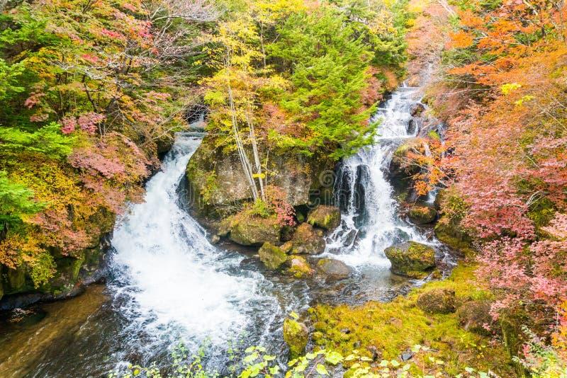 Ryuzu vattenfall i höst på nikko tochigi Japan arkivfoto