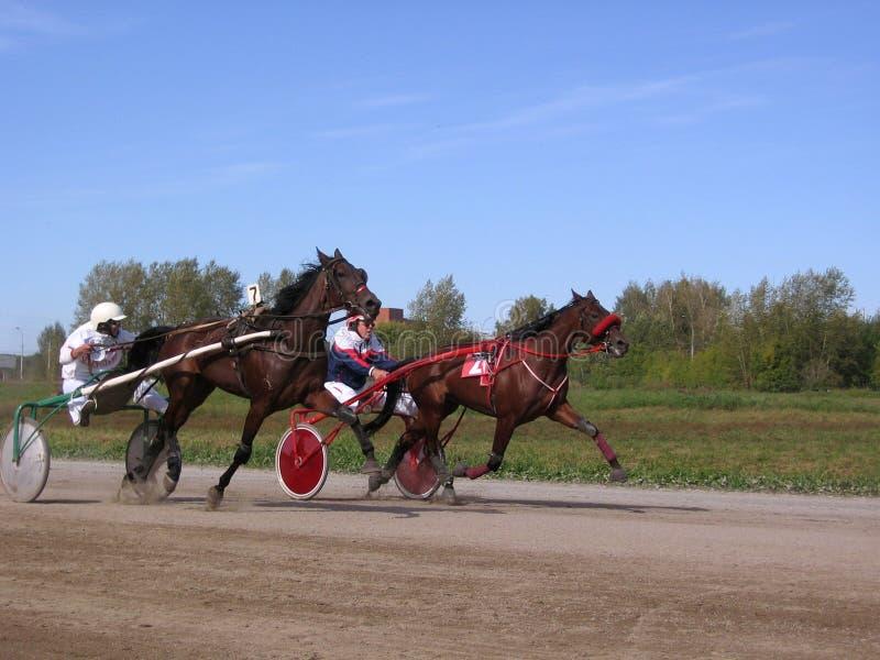 Rywalizacja koni kłusować trakenów Novosibirsk tor wyścigów konnych jeździec i koń obraz stock