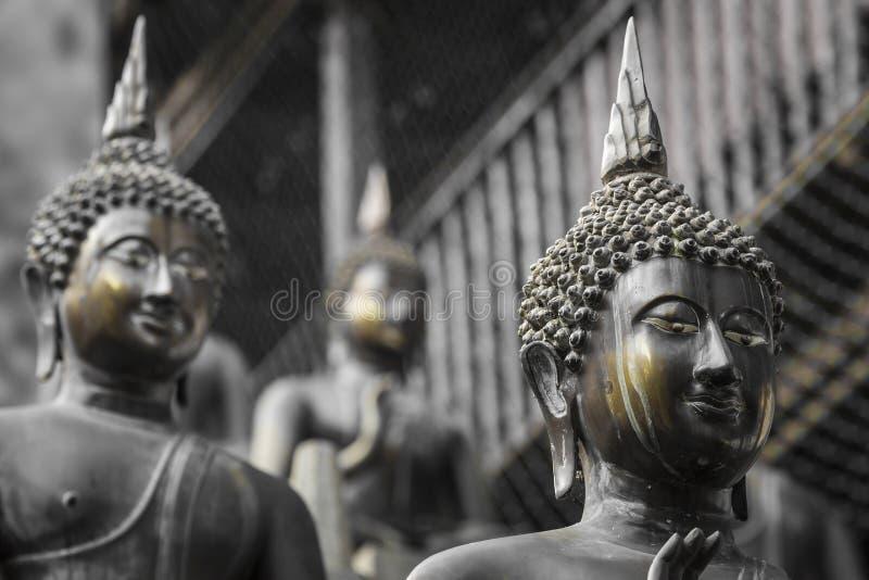 Rząd Buddha statuy przy Ganagarama świątynią, Kolombo, Sri Lanka obraz royalty free