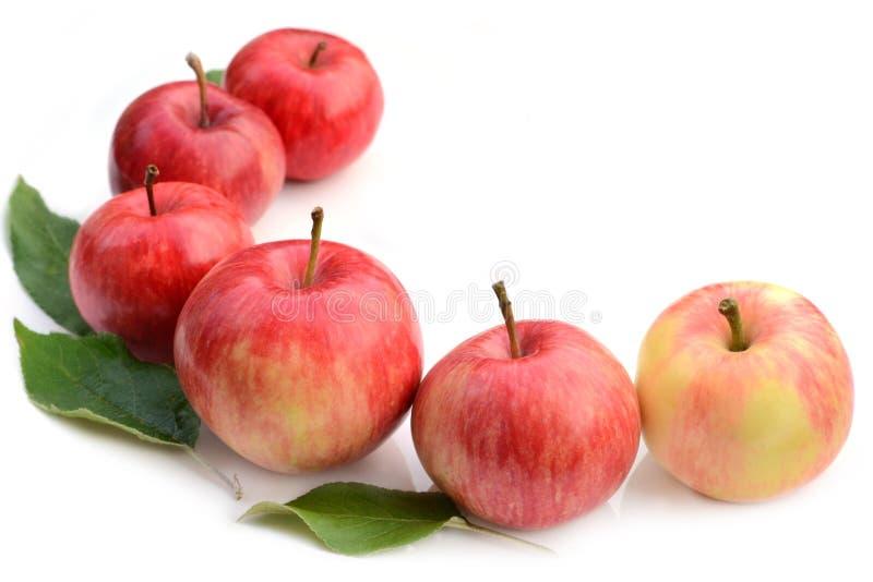 Rząd czerwoni jabłka na białym tle obrazy royalty free