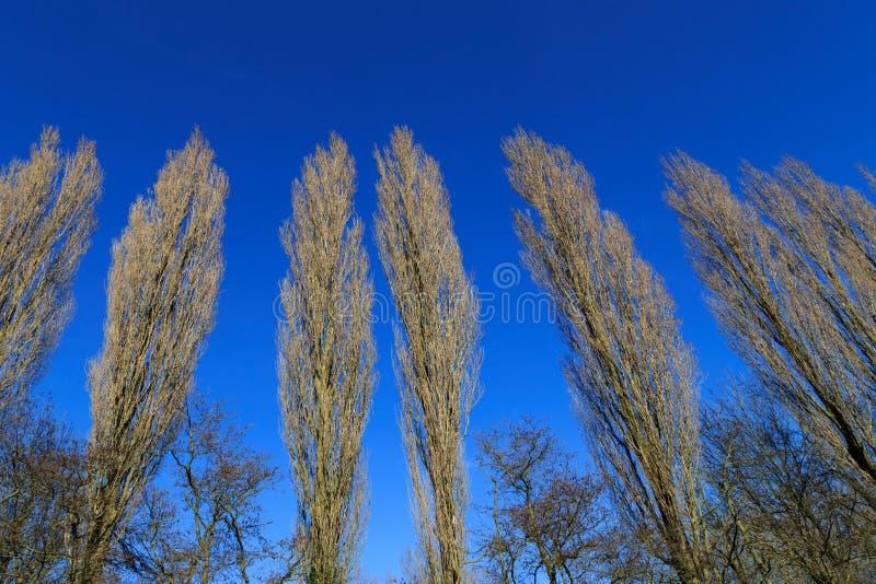 rząd drzew zdjęcie stock