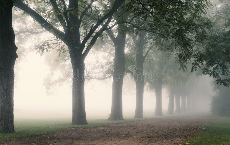 Rząd drzewa na Mgłowym pas ruchu obrazy stock