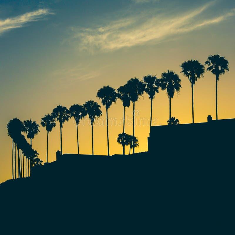 Rząd drzewka palmowe przy wschodem słońca zdjęcia stock