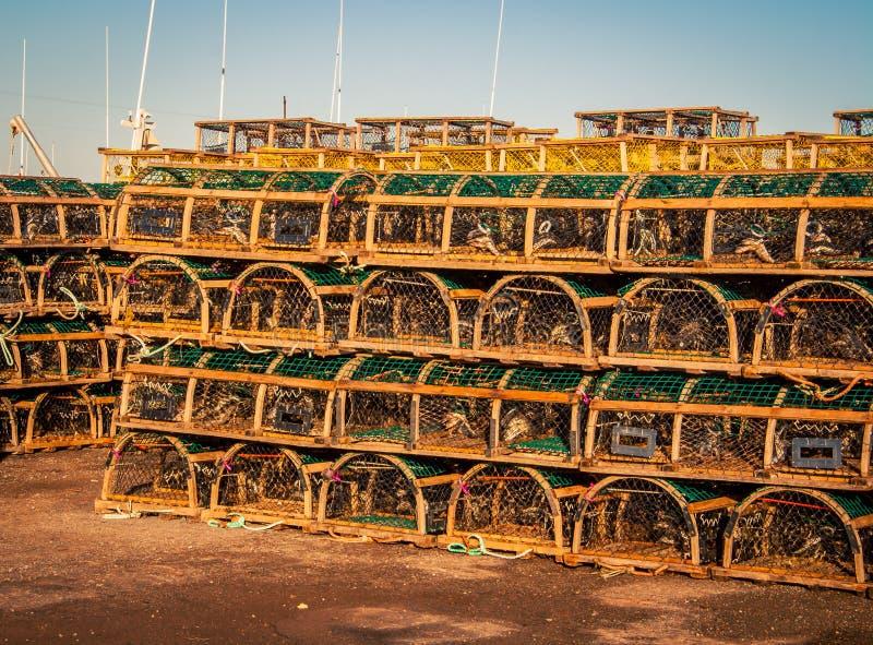 Rząd homarów oklepowie obraz royalty free
