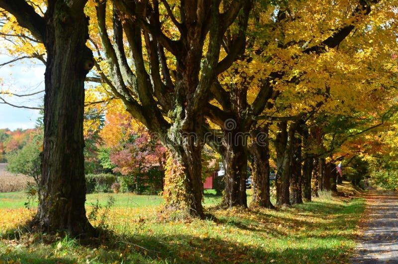 Rząd kolorowi drzewa wzdłuż wiejskiej drogi zdjęcia stock