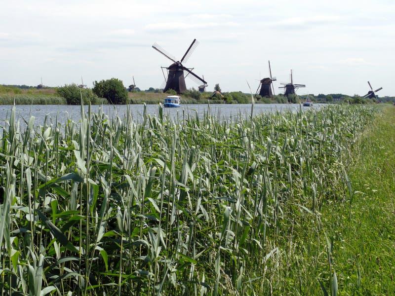 Rząd młyny w Kinderdijk, holandie zdjęcie royalty free