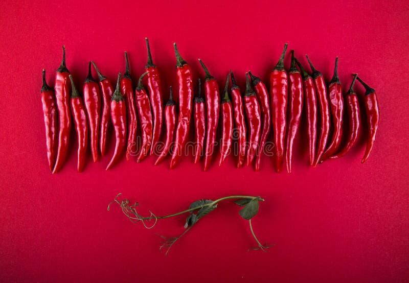 Rząd mali czerwonego chili pieprze i groch kiełkujemy na czerwonym tle Mieszkanie nieatutowy Odgórny widok overhead kosmos kopii obrazy stock