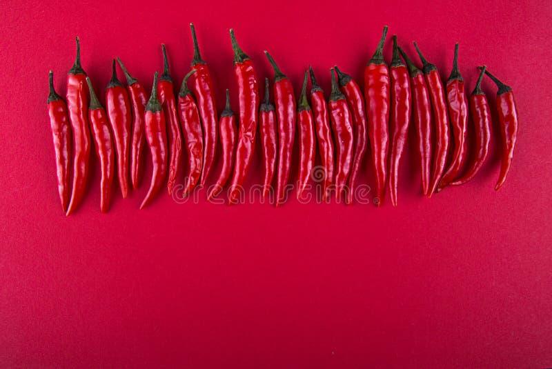 Rząd mali czerwonego chili pieprze na czerwonym tle Mieszkanie nieatutowy Odgórny widok overhead kosmos kopii zdjęcia royalty free