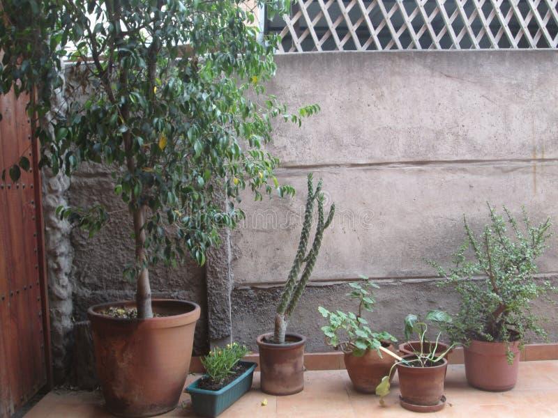 Rząd rośliny fotografia stock