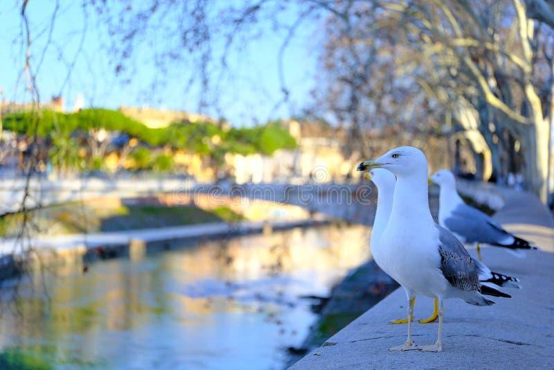 Rząd seagull ptaki fotografia royalty free