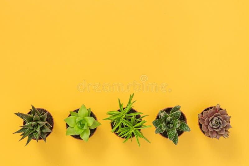 Rząd sukulent rośliny na żółtym tle fotografia stock