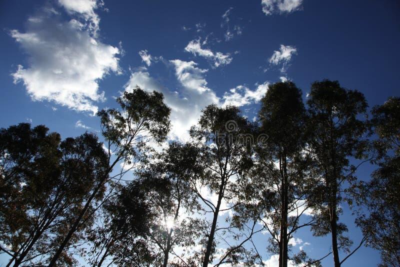 Rząd sylwetkowi drzewa przeciw niebieskiemu niebu fotografia royalty free
