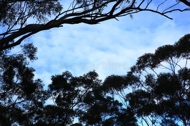 Rząd sylwetkowi drzewa przeciw niebieskiemu niebu zdjęcie royalty free