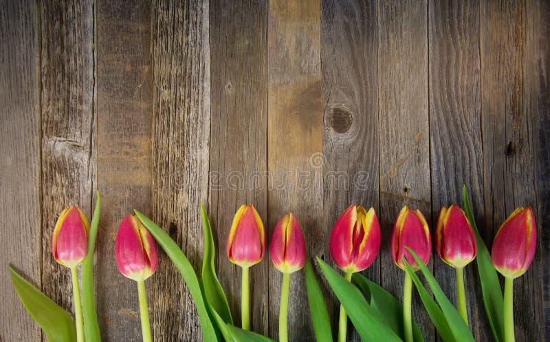 Rząd tulipany na drewnie zdjęcie royalty free