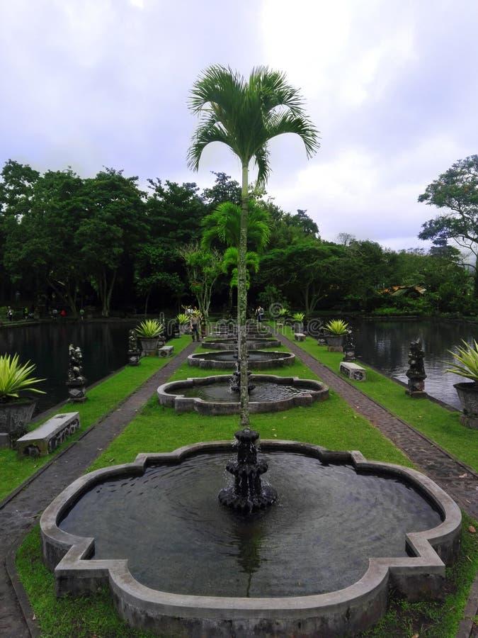 Rząd zielone palmy i stawy obrazy royalty free