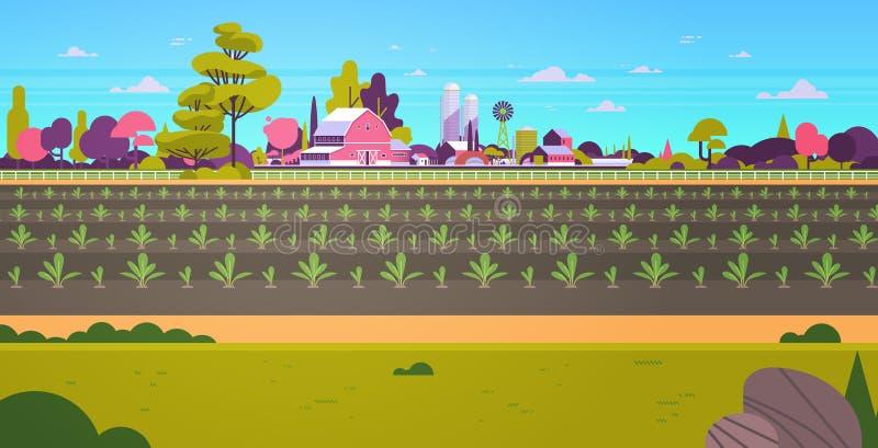 Rzędów potomstw rośliien plantacji świeżo kiełkujący jarzynowy rolnictwo i uprawiać ziemię pojęcie ziemi uprawnej pola  royalty ilustracja