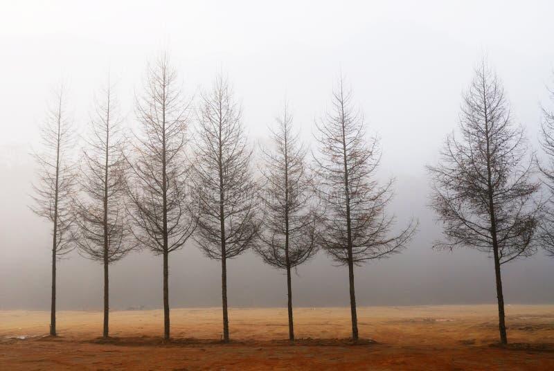 rzędu drzewo obrazy royalty free