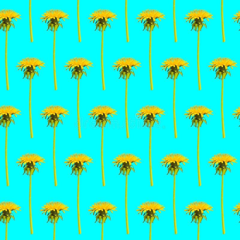 Rzędy dandelion kwitną na błękitnym tle obrazy royalty free