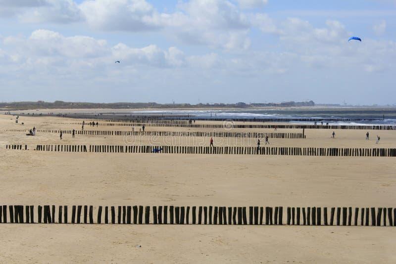 Rzędy plażowi słupy - falochrony wzdłuż holendera suną w cadzand fotografia royalty free