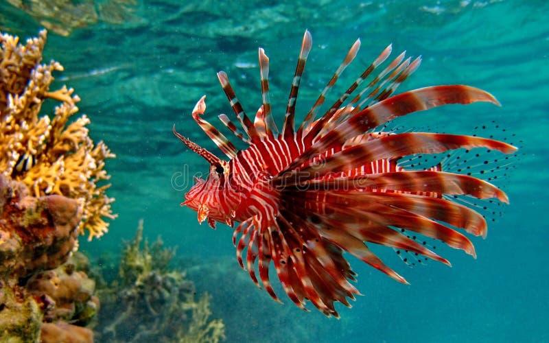 Rzadcy rybi zwierzęta fotografia stock